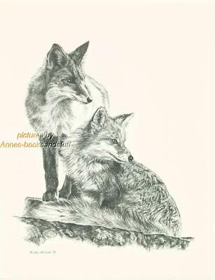 #136 two (2) FOXES  wild life art print * Pen & ink drawing done by Jan Jellins