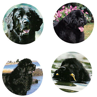 Newfoundland Magnets :4 Cool Newfies for your Fridge or Collection-A Great Gift