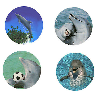 Dolphin Magnets:4 Cool Dolphins for your Fridge or Collection-A Great Gift