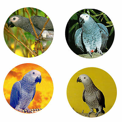 African Grey Magnets: 4 African Greys 4 your Fridge or Collection-A Great Gift