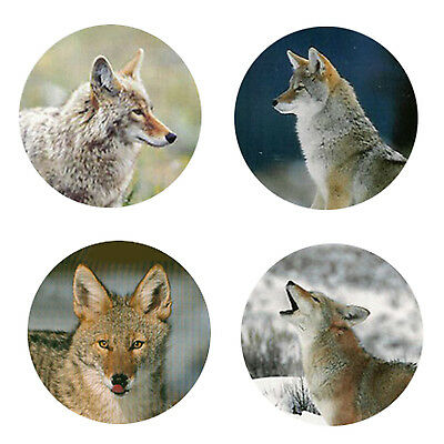 Coyote  Magnets: 4 Cool Coyotes for your Fridge or Collection-A Great Gift
