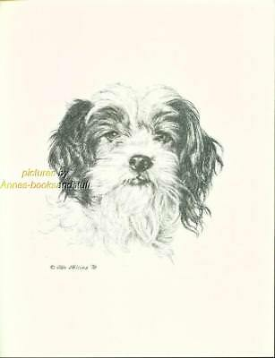 #140 mixed breed TERRIER MUTT dog art print Pen and ink drawing by  Jan Jellins
