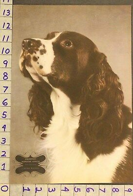 1942  Dog Canine Brittany Spaniel Sport Hunt Breeder Waxman Photo Print Ru83