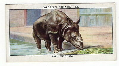 Vintage 1937 Zoo Studies Card of a RHINOCEROS