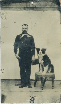 Antique 1800s Tintype Photo Man with Border Collie? Dog on a Chair Big Bowtie