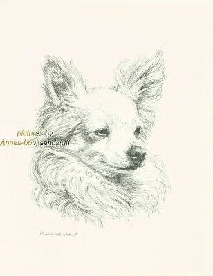 # 72 CHIHUAHUA Long Haired dog art print * Pen and ink drawing * Jan Jellins