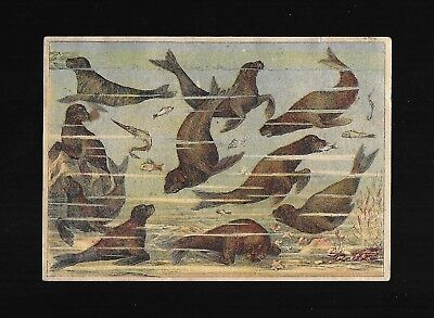 School Sea Lions-Sells Brothers Circus Rail Road Show-Victorian Trade Card-RARE