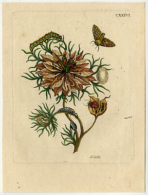 Antique Print-INSECTS-LOVE IN A MIST-RAGGED LADY-LADYBUG-pl. 136-Merian-1730