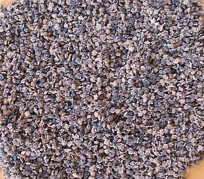 1 lb SUGAR BEETS Seed FALL DEER PLOT SEEDS Forage UNCOATED Pure Sugar Beet