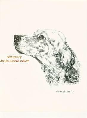 # 158 ENGLISH SETTER portrait dog art print * Pen and ink drawing by Jan Jellins