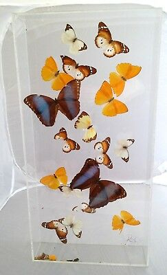 Real Framed Natural Rare 18 Butterflies Mounted Taxidermy Signed Acrylic Case