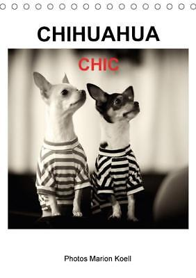 Tischkalender 2018 DIN A5 CHIHUAHUA CHIC Photos Marion Koell