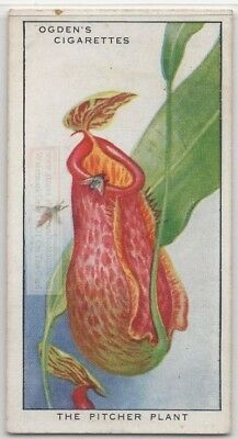 Carnivorous Pitcher Plant Insect Eating Trap Nectar 85+ Y/O Trade Ad Card