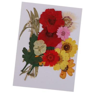 Multiple Pressed Flowers Rose, Daisy, Larkspur, Myosotis Real Dried Flowers