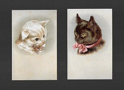 White Cat & Black Cat Wearing Neck Ribbons-2 Victorian Trade Cards