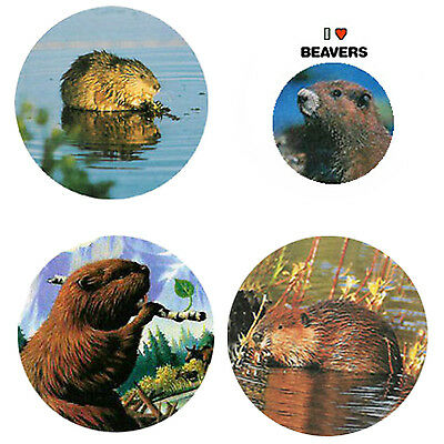 Beaver  Magnets: 4 Bodacious Beavers for your Fridge or Collection-A Great Gift