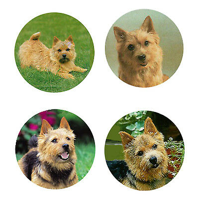 Norwich Terrier Magnets: 4 Norwichs for your Fridge or Collection-A Great Gift