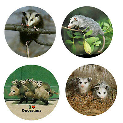 Possum Magnets-O  4 Opossum Magnets 4 your home or collection-Great Gift