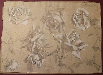 DIPINTO watercolor painting BOZZETTO A LAPIS E BIACCA 1900 ROSE