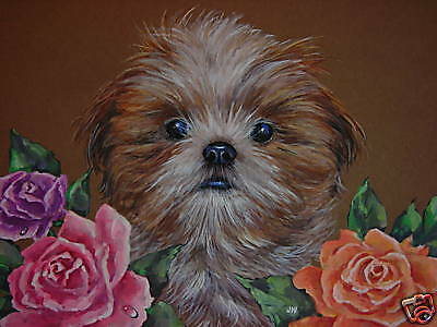 ACEO Shih Tzu Exotic pedigree dog animal Rose print