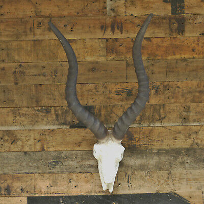 Antelope Skull Head Wall Mounted Hanging Gazelle Art Decor Resin Animal Horns