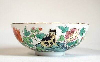 Fine antique Chinese 19th century famille rose shallow bowl 'Cat' - mark to base