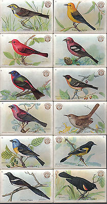 Useful Birds Of America Series 3 Complete Set Of 30 By Arm And Hammer