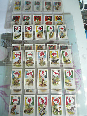 full set of 50 cards john player and sons boy scout and girl guide 1933