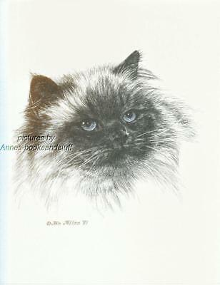 #296 HIMALAYAN CAT portrait art print * Pen and ink drawing by Jan Jellins