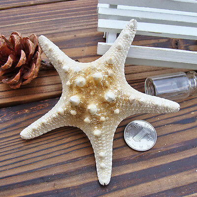 2PC Natural Starfish Shell Star Beach Landscape Sea Party Decor Craft DIY 4cm