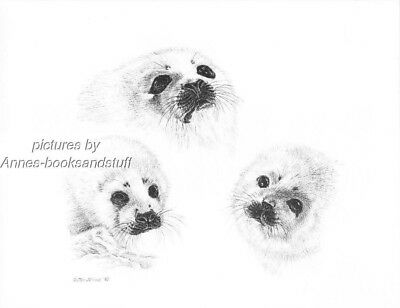 #366 HARP SEALS portrait  wildlife  art print * pen & ink drawing by Jan Jellins