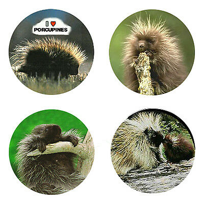 Porcupine Magnets: 4 Pointy Porcupines 4 your Fridge or Collection-A Great Gift