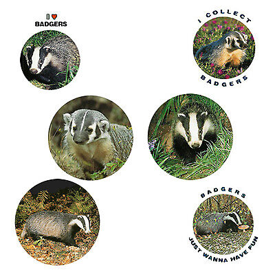 Badger  Magnets:   6 Bodacious Badgers  for your Collection--A Great Gift