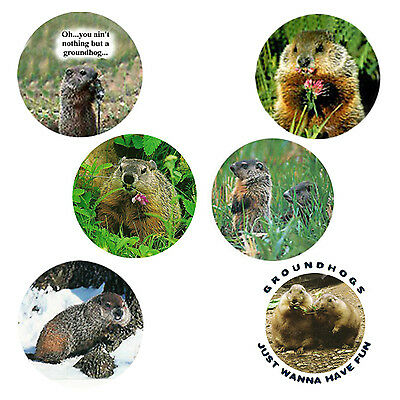 Groundhog Magnets:   6 Cool Groundhogs  for your Collection--A Great Gift
