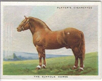 Suffolk Draft Horse Breeds Types Of Equines c90 Y/O Ad Trade Card