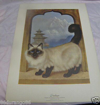 "Girard Goodenow Print Of Painting Himalayan Cat Vintage 1965 14""x19"""