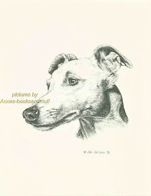 #120 WHIPPET portrait  dog art print * Pen and ink drawing * Jan Jellins