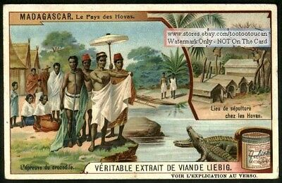 Madagascar Natives Worshiping The Crocodile 1909 Trade Ad  Card