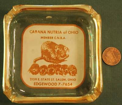 1950s Era Salem,Ohio Cabana Nutria of Ohio Rat Breeding Co. glass ashtray-RARE!