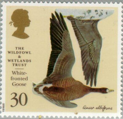 GREAT BRITAIN -1996- Greater White-fronted Goose (Anser albifrons) - Sc. #1655
