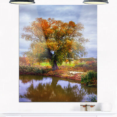 Willow Near Pond - Landscape Photography Glossy Metal Wall Green