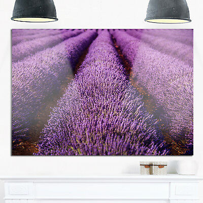 Endless Rows of Lavender Field - Oversized Landscape Glossy Blue