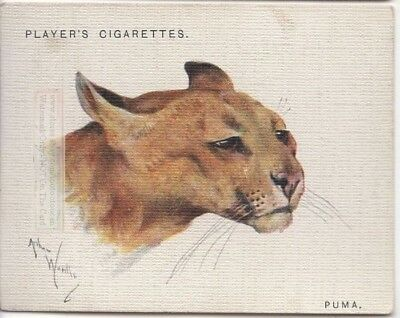 Mountain Lion Puma Panther Wild Cat 80+ Y/O Trade Advertising Card