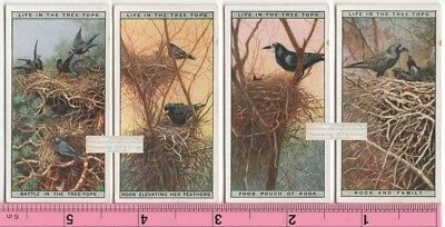 Rook Crow Raven Bird and Family Nest FOUR 90+ Y/O Ad Trade Cards 5