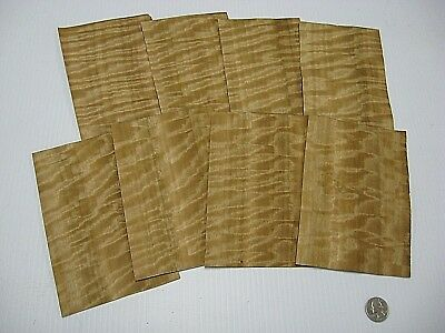 1 Lot Of 8Pcs Mottled Figured Eucalyptus Raw Veneer Shorts, Lot #570