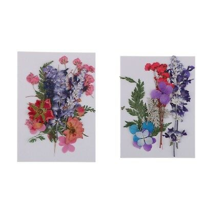 Assorted Pressed Flowers Real Dried Flowers DIY Decor Home Arts Resin Crafts