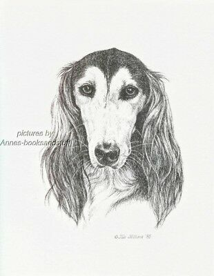 #358 SALUKI dog portrait  art print * Pen and ink drawing * Jan Jellins