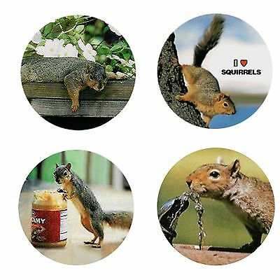 Squirrel Magnets-A: 4 Sassy Squirrels for your Fridge or Collection-A Great Gift