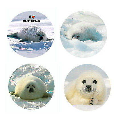 Harp Seal  Magnets:  4 Cool Harps for your Fridge or Collection-A Great Gift