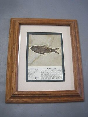 Framed Fish Fossil w Glass Lake Uinta Green River Shale Formation Wyoming